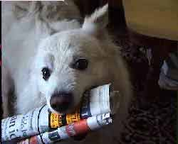 Picture of a dog with a newspaper